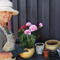 Senior woman potting flowers